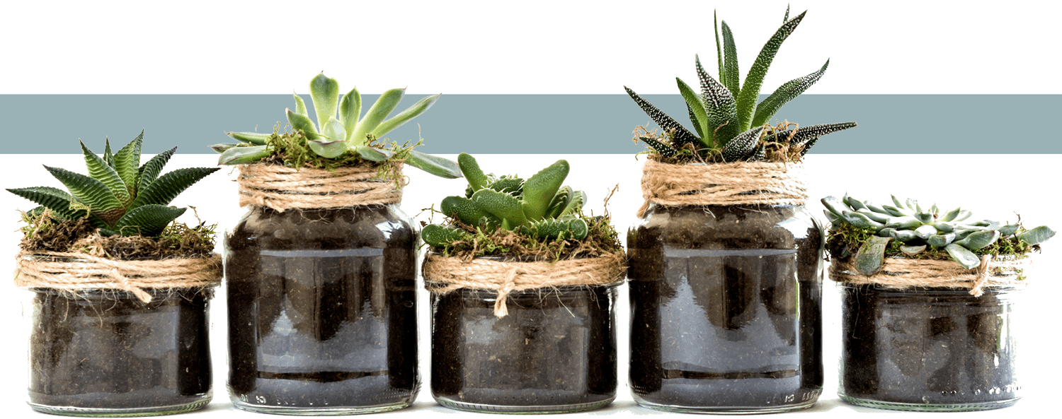 five succulents in glass jars lined up horizontally